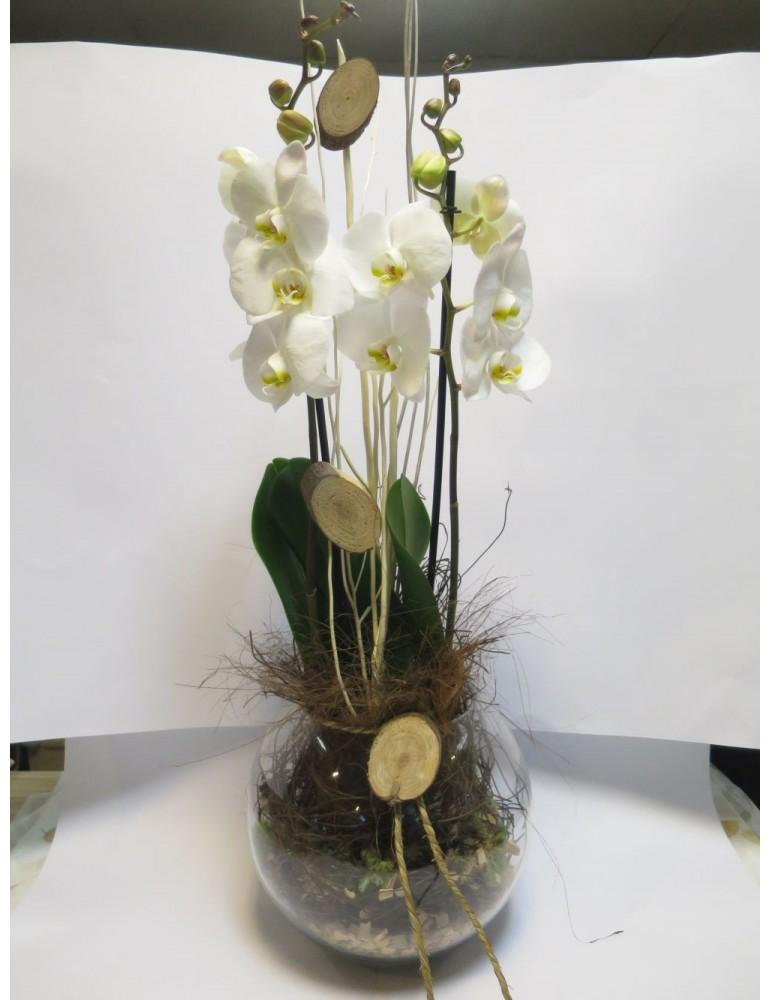 Storczyk W Szkle Kwiaciarniamagnoliamikolow
